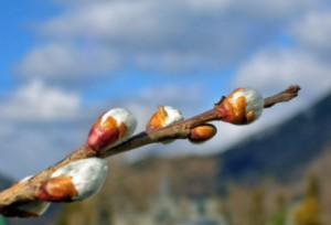 春の足音201401311645370
